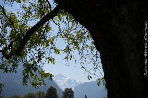 civil wedding Interlaken Switzerland-20