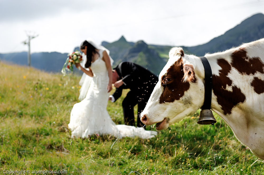 Swiss Cow Bride