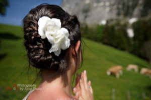 Wedding bells are ringing Swiss cows