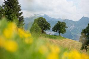 marriage proposals Interlaken